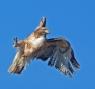 Aerialist