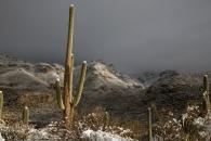 Snowstorm, Sabino Canyon