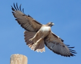 Red Tail Liftoff