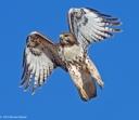 Leaping Skyward