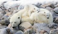 Sleeping Madonna and Children