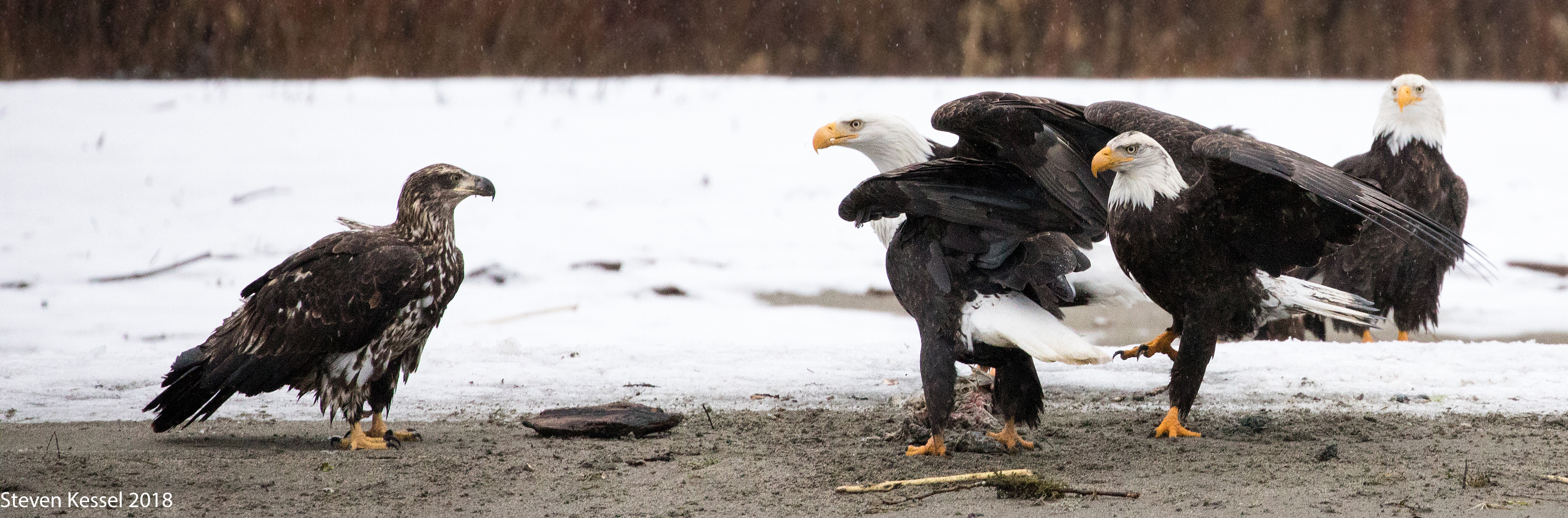 Intimidating pictures of eagles